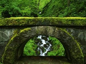 green-natural-scenes